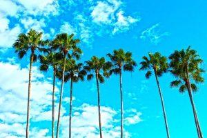 Florida, palm trees.