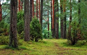 An evergreen forest with a path, following which one can further explore  small towns of Louisiana.