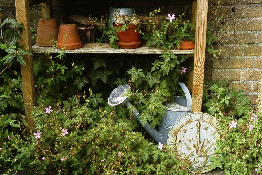 Plants, flowerpots, and a garden bucket